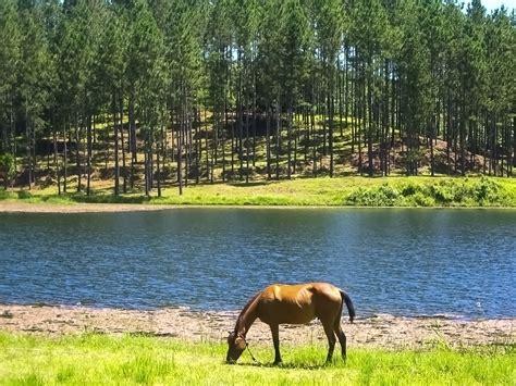 imagenes jpg paisajes file caballo en paisaje cestre jpg wikimedia commons