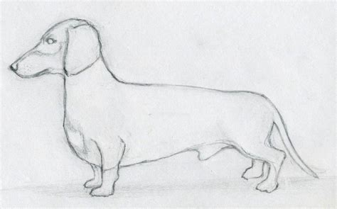 how to draw dogs http animalvista wp content uploads 2012 06 how to draw a jpg