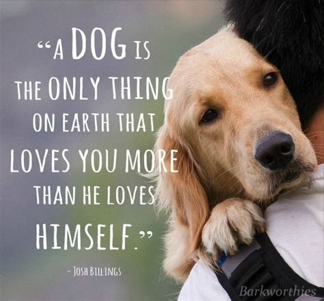 quotes about puppies quotes about unconditional quotesgram