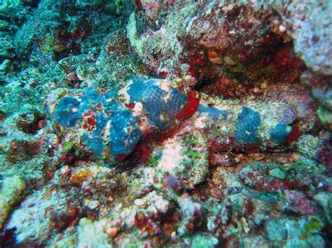 dive gili trawangan diving in indonesia go diving in gili islands dive in