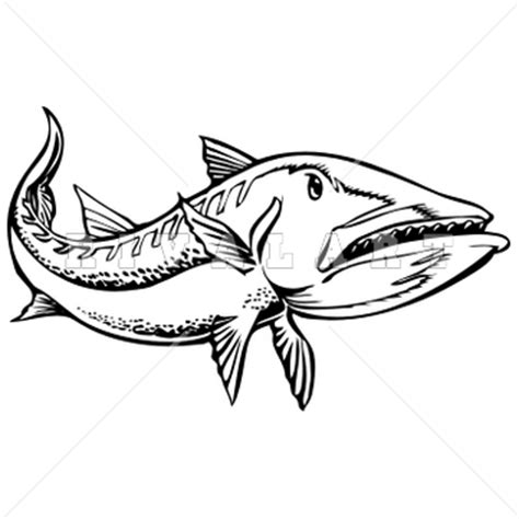 barracuda clipart barracuda clipart