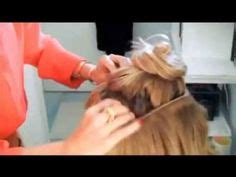 trygstad hair extensions like halo hair kelly ripa s hair extensions ryan