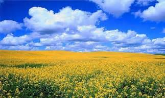 Yellow Flowered Wallpaper - beautiful flowers discountedlife