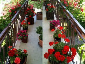 Spatifillo Come Curarlo verdeblog giardinaggio fai da te