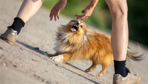 fear aggression 15 facts about fear aggression in dogs and what you should