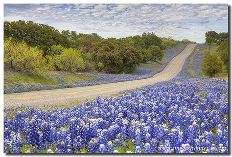 Texas Hill Country Homes Texas Bluebonnet Highway Texas Hill Country Flickr