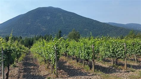 recline ridge winery the cooler side of bc s emerging wine regions mywinepal