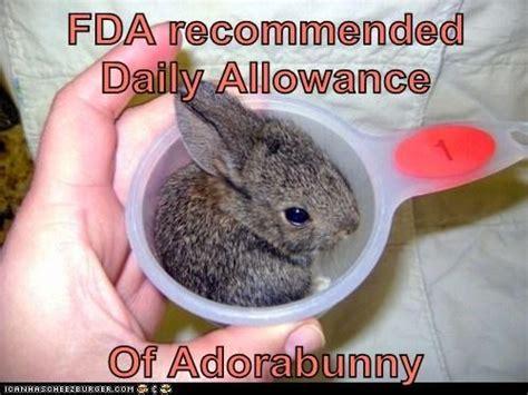 silly rabbit meme rabbit ramblings bunny memes