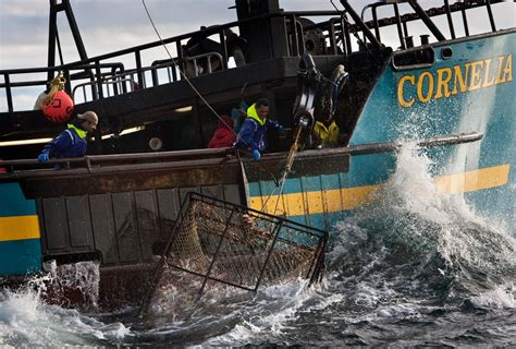 northwestern fishing boat jobs crab fishery featured in deadliest catch begins nbc news