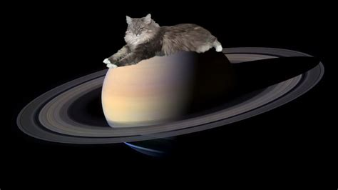 features of saturn cosmic kittens saturn features get feline names