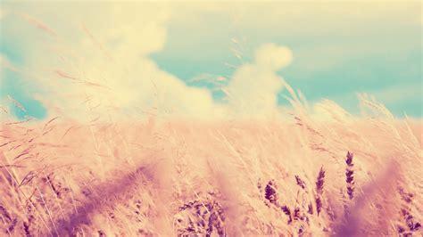 imagenes tumblr para fondo de escritorio imagenes hilandy fondo de pantalla paisaje co de trigo