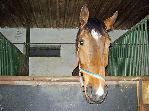 stall pferd pferd