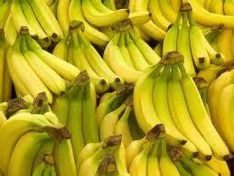 Bibit Pisang Cavendish Hijau Kultur Jaringan 20 Batang bibit pisang unggul purworejo mengenal pisang cavendish si pisang ambon putih