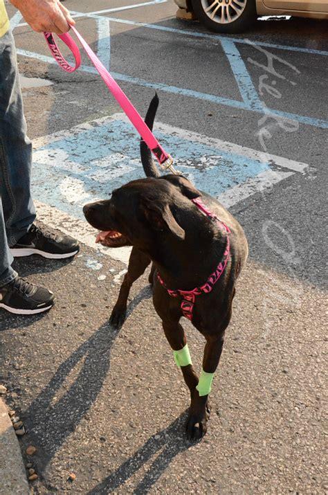 banfield puppy plan banfield pet hospital review