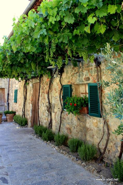 cottage italy 25 best ideas about grape vines on growing