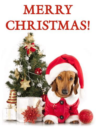 santa dachshund merry christmas card birthday greeting cards  davia