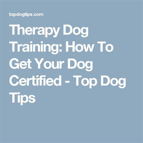 how to get therapy certification 1000 ideas about therapy on therapy dogs service dogs and
