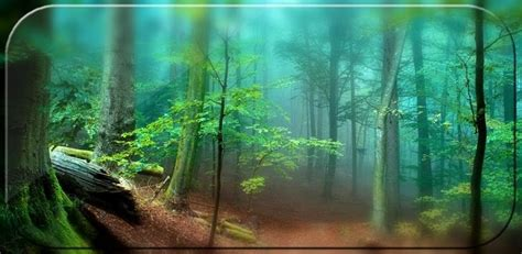 forest hd apk free forest live wallpaper 3d apk apk downloads ws
