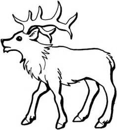 sketch of bull elk coloring pages