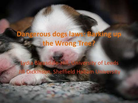 barking laws dangerous dogs laws barking up the wrong tree