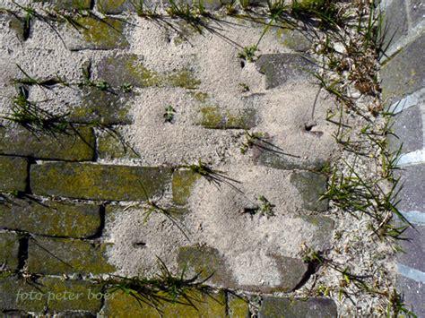 tuin een grote mieren nest grote mieren potplanten buiten schaduw