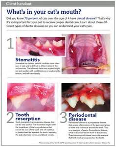 Wellness Dental Dental Health Picmia