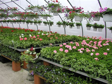 color spot nursery planning your new garden and the basics of simple design