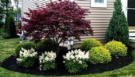 maple tree near house japanese maple with white astilbe wironen inspiration board japanese maple