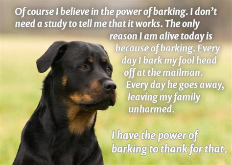why do dogs bark at the mailman and dangerous cures but popular