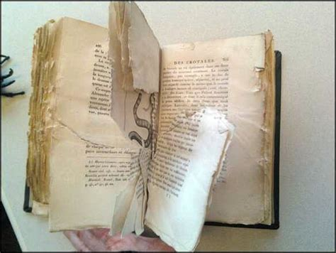 damaged books damaged book 10 here the patron i otherwise it s