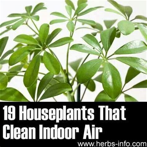 indoor plants to clean air cleaning house house plants good for cleaning air