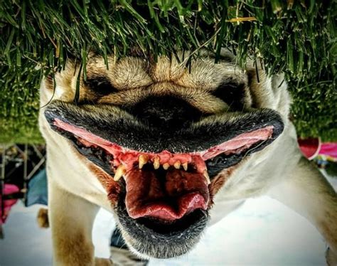 do dogs nightmares image gallery nightmares