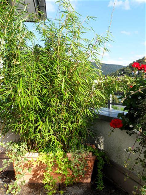 laternen für den garten balkon dekor bepflanzen