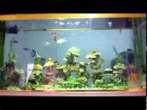 desain aquarium air tawar aquarium air tawar dalam dinding el hafidz avi youtube