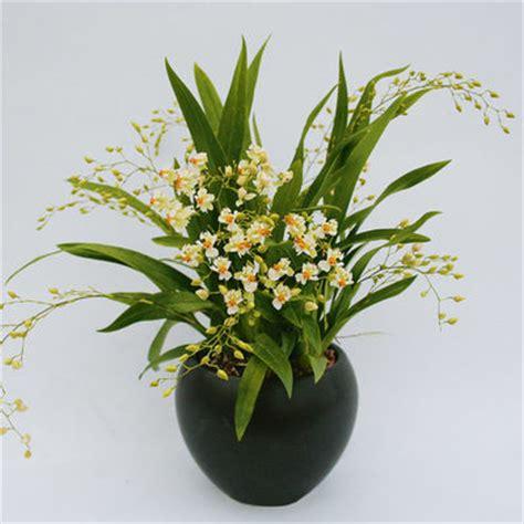 orchideen samen kaufen winterharte orchideen kaufen orchideen kaufen der