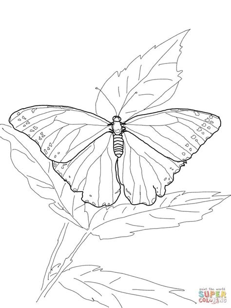 rainforest butterfly coloring pages 33 best rainforest outlines images on pinterest adult