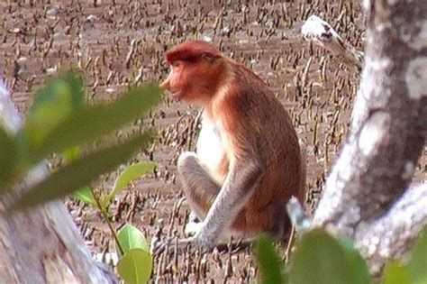 Bako National Park Sarawak Malaysian Borneo - travel world ...