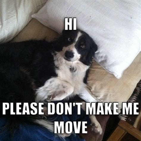 Border Collie Meme - made a meme of my baby trey must love dogs pinterest