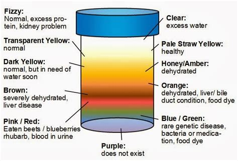 color of urine chart urine color meaning brown orange black purple etc