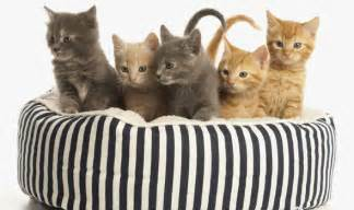 top 10 facts about cats on international cat day top 10