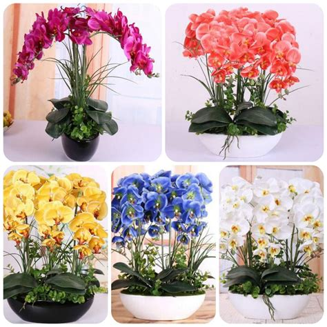orchideen samen kaufen orchidee samen hohe simulation blume phalaenopsis orchidee