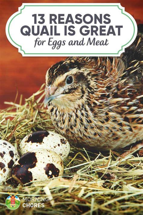 raising backyard quail 17 best ideas about raising quail on pinterest quail