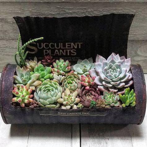 Pot Flowers Kaleng kereasi dari barang bekas kaleng di jadikan sebagai pot