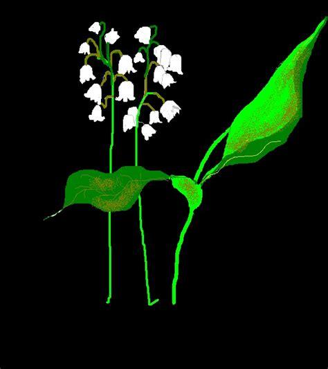 mughetto fiore significato fiori il linguaggio dei fiori