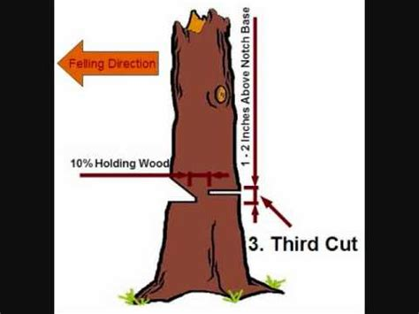 how to cut a tree diagram tree felling simple notch and back cut technique wmv
