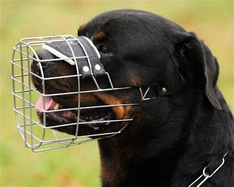 cage for rottweiler wire muzzles basket muzzles best muzzle choose muzzle