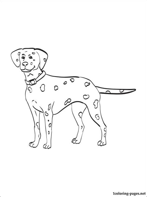 coloring pictures of dalmatian dogs dalmatian coloring page coloring pages