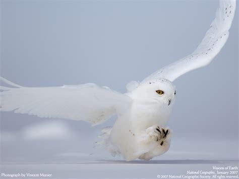owl symbolism tania marie s blog