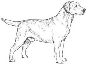 labrador coloring pages labrador retriever page