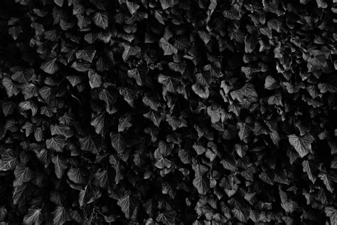 Black And White Soil Pattern free images tree nature black and white texture leaf